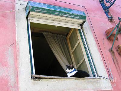 Photograph - Alfama Cat In Window - Pink House by Menega Sabidussi