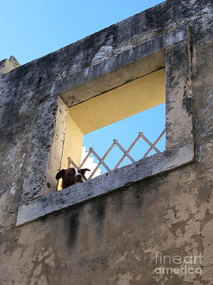 Photograph - Alfama Dog Looking Out Of A Hole In The Wall by Menega Sabidussi