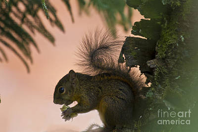 Zoologic Photograph - Alfresco Dining2 by Heiko Koehrer-Wagner