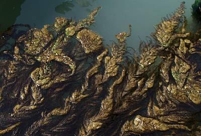 Algae Art Print by Ron Harpham