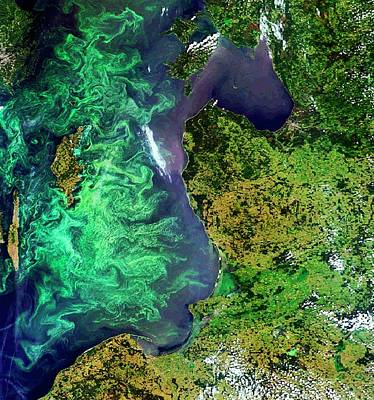 Algal Blooms Print by European Space Agency