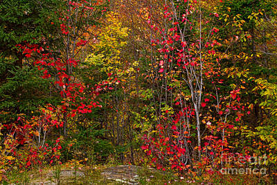 Photograph - Algonquin Fall Scene by Les Palenik