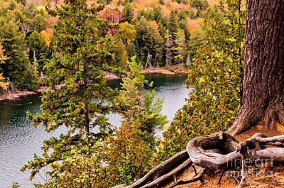 Photograph - Algonquin Park - Jack Lake by Les Palenik