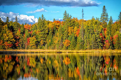 Photograph - Algonquin Park Reflections by Les Palenik