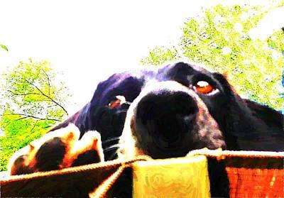Dog Rescue Digital Art - Alice by Anne Sterling