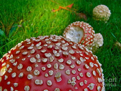 Photograph - Alice's Shrooms by LeLa Becker