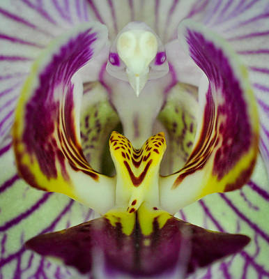 Photograph - Alien Bird Flower by Kevin Munro