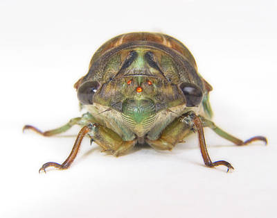 Cicada Photograph - Alien Invasion by David and Carol Kelly