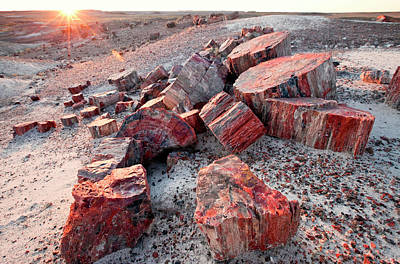 Petrified Forest Arizona Photograph - Alien Landscape, Petrified Logs by Susan Degginger