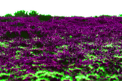 Travel Rights Managed Images - Alien Marsh Royalty-Free Image by Chris Hulse