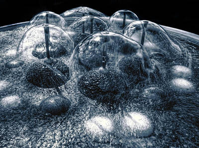 Photograph - Alien Pods by Wayne Sherriff