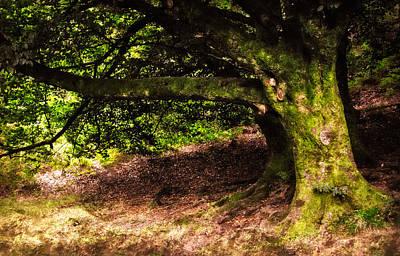 Alive Memory Of Thetrees. Glendalough. Ireland Art Print by Jenny Rainbow