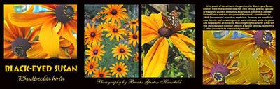 Deer Resistant Flowers Photograph - All About Black-eyed Susans by Brooks Garten Hauschild