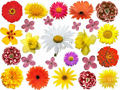 All Beauty Flower Closeup Print by Boon Mee