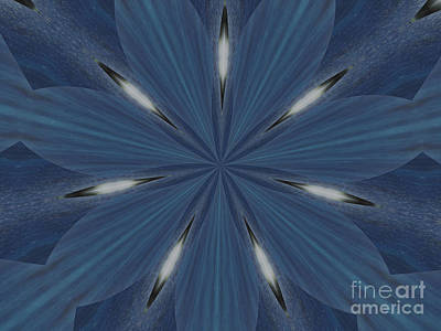 Photograph - All Blue by Donna Brown
