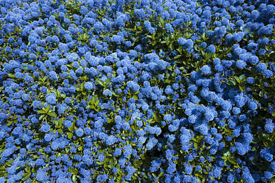 All Blue Art Print by Svetlana Sewell