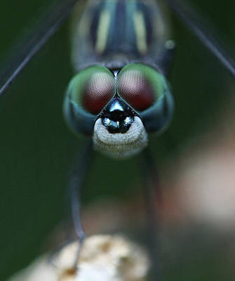 Insect Photograph - All Eyes by Photo By Wayne Bierbaum; Annapolis, Maryland