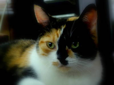 Of Calico Cats Photograph - All I Ask Of You by Lingfai Leung