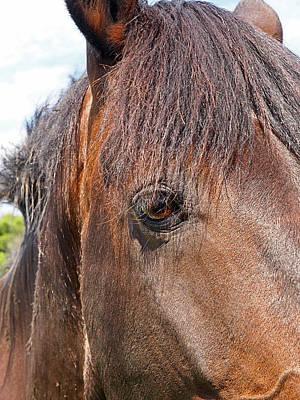 Photograph - All I Need Is Love - Sad Horse by Gill Billington