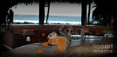 All Inclusive Squirrel Art Print by Gary Keesler