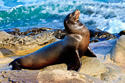 Photograph - All Is Well - Sea Lion by Ben Graham