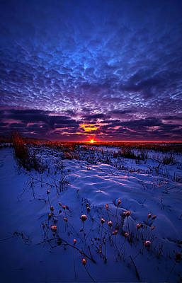Red Leaves Snow Wall Art - Photograph - All The Dreams I Used To Know by Phil Koch