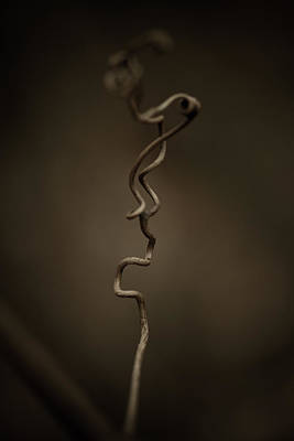 Vines Photograph - All The In-betweens by Shane Holsclaw