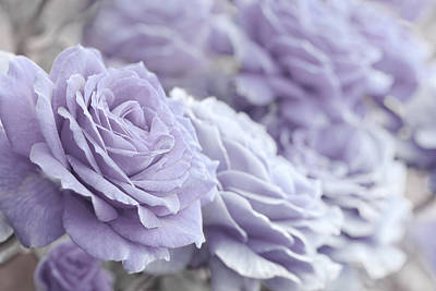 Photograph - All The Lavender Roses by Jennie Marie Schell