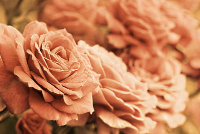 Photograph - All The Orange Roses by Jennie Marie Schell