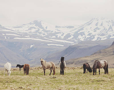 Photograph - All The Pretty Horses by Irene Suchocki