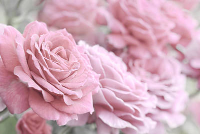 Photograph - All The Soft Pink Roses by Jennie Marie Schell
