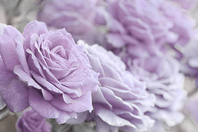 Photograph - All The Soft Violet Roses by Jennie Marie Schell