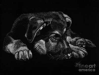 German Shepard Drawing - All Tuckered Out by Yenni Harrison