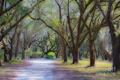 Photograph - Allee by Dale Powell