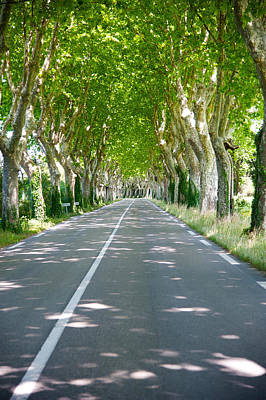 Provence Photograph - Allee Of Trees, St.-remy-de-provence by Panoramic Images