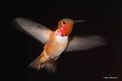 Photograph - Allen's Hummingbird Blur 2 by Avian Resources