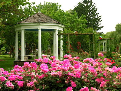 Photograph - Allentown Pa Gross Memorial Rose Gardens by Jacqueline M Lewis