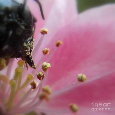 Photograph - Allergy Season by Renee Trenholm