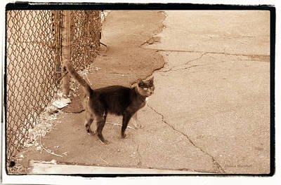Photograph - Alley Cat by Donna Blackhall