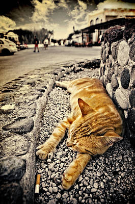 Alley Cat Siesta In Grunge Art Print by Meirion Matthias