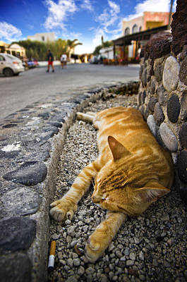 Ginger Cat Photograph - Alley Cat Siesta by Meirion Matthias