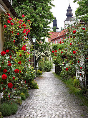 Photograph - Alley Of Roses by Dreamland Media