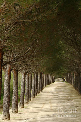 Photograph - alley to El Escorial Spain by Rudi Prott