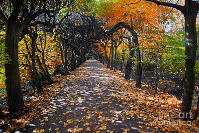 Charming Photograph - Alley With Falling Leaves In Fall Park by Michal Bednarek