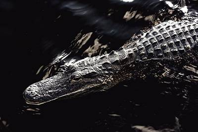 Photograph - Alligator -35 by Rudy Umans