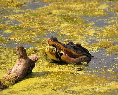 Alligator Ambush Art Print by Al Powell Photography USA