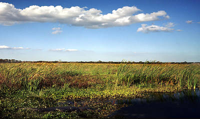 Photograph - Alligator And Floodplain. Wetlands Park. by Chris  Kusik