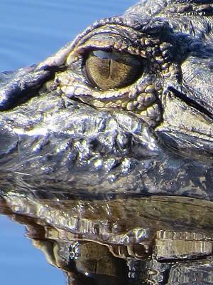 Alligator Photograph - Alligator Eye by Zina Stromberg