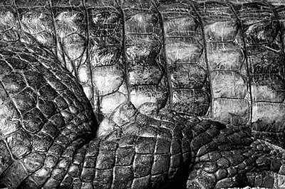 Photograph - Alligator by Goyo Ambrosio