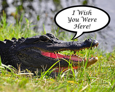 Photograph - Alligator Greeting Card by Al Powell Photography USA